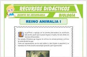 Ficha de Phylum Poríferos y Phylum Cnidarios para Quinto de Secundaria