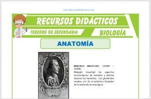 Ficha de Que Estudia la Anatomía para Tercero de Secundaria