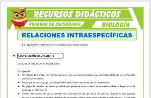 Ficha de Relaciones Intraespecíficas para Primero de Secundaria