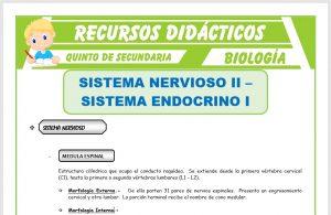 Ficha de Sistema Nervioso y Sistema Endocrino para Quinto de Secundaria